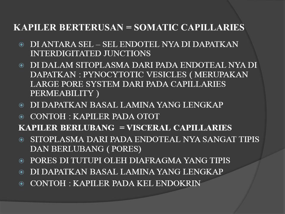 KAPILER BERTERUSAN = SOMATIC CAPILLARIES  DI ANTARA SEL – SEL ENDOTEL NYA DI DAPATKAN INTERDIGITATED JUNCTIONS  DI DALAM SITOPLASMA DARI PADA ENDOTEAL NYA DI DAPATKAN : PYNOCYTOTIC VESICLES ( MERUPAKAN LARGE PORE SYSTEM DARI PADA CAPILLARIES PERMEABILITY )  DI DAPATKAN BASAL LAMINA YANG LENGKAP  CONTOH : KAPILER PADA OTOT KAPILER BERLUBANG = VISCERAL CAPILLARIES  SITOPLASMA DARI PADA ENDOTEAL NYA SANGAT TIPIS DAN BERLUBANG ( PORES)  PORES DI TUTUPI OLEH DIAFRAGMA YANG TIPIS  DI DAPATKAN BASAL LAMINA YANG LENGKAP  CONTOH : KAPILER PADA KEL ENDOKRIN