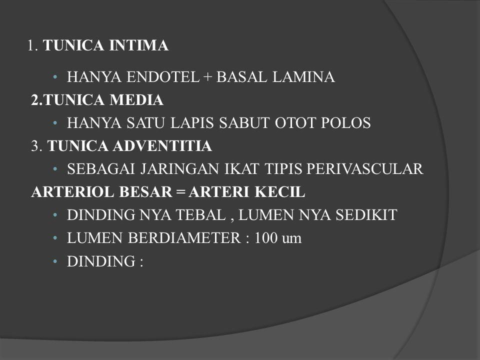1. TUNICA INTIMA HANYA ENDOTEL + BASAL LAMINA 2.TUNICA MEDIA HANYA SATU LAPIS SABUT OTOT POLOS 3. TUNICA ADVENTITIA SEBAGAI JARINGAN IKAT TIPIS PERIVA