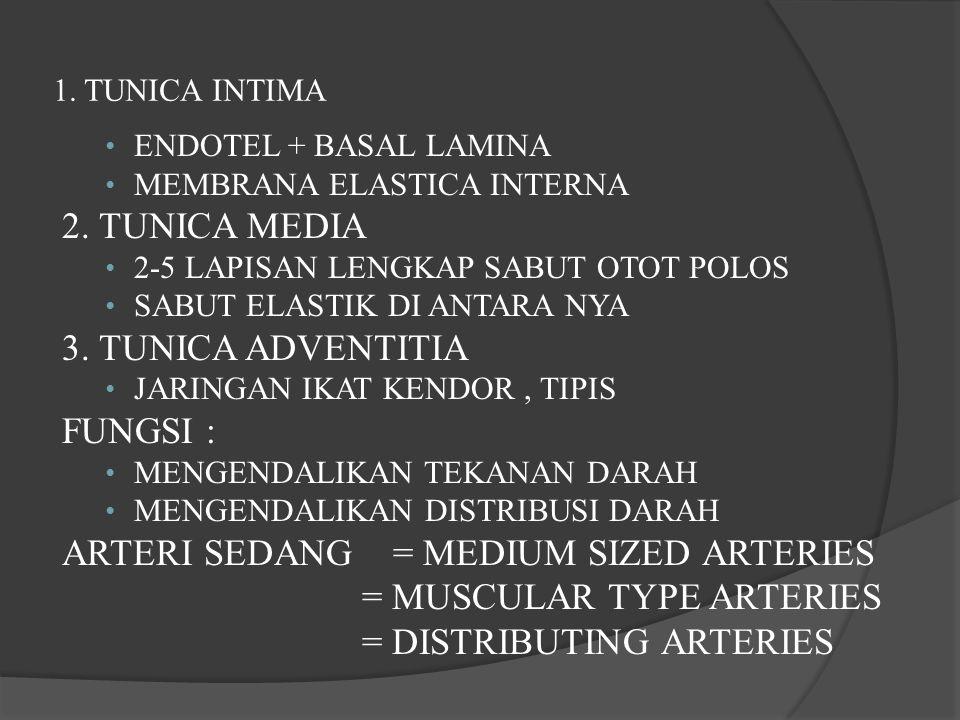 1. TUNICA INTIMA ENDOTEL + BASAL LAMINA MEMBRANA ELASTICA INTERNA 2. TUNICA MEDIA 2-5 LAPISAN LENGKAP SABUT OTOT POLOS SABUT ELASTIK DI ANTARA NYA 3.