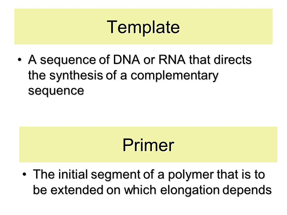 All DNA polymerases require a primer DNA is synthesized 5' to 3' Important facts TB