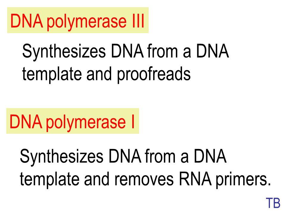 Polimerase Memerlukan primer dan cetakan DNAMemerlukan primer dan cetakan DNA Polimerisasi diperpanjang pada 3'Polimerisasi diperpanjang pada 3' Aktiv