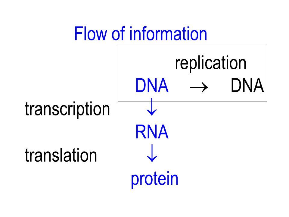 ALUR INFORMASI GENETIK