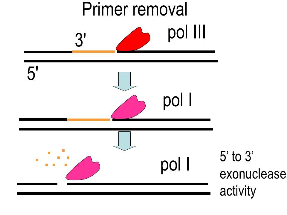 helicase ssDNA binding proteins (primase) pol III 3' Lagging strand synthesis (discontinuous) Okazaki fragment (~1000 bases) 3' 5'
