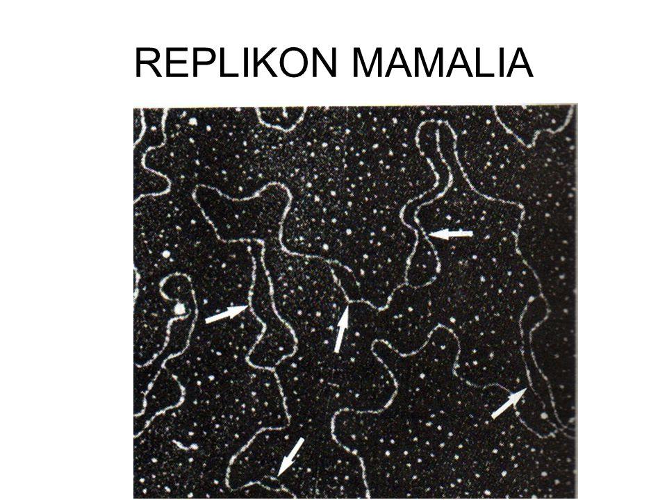 REPLIKON E.coli