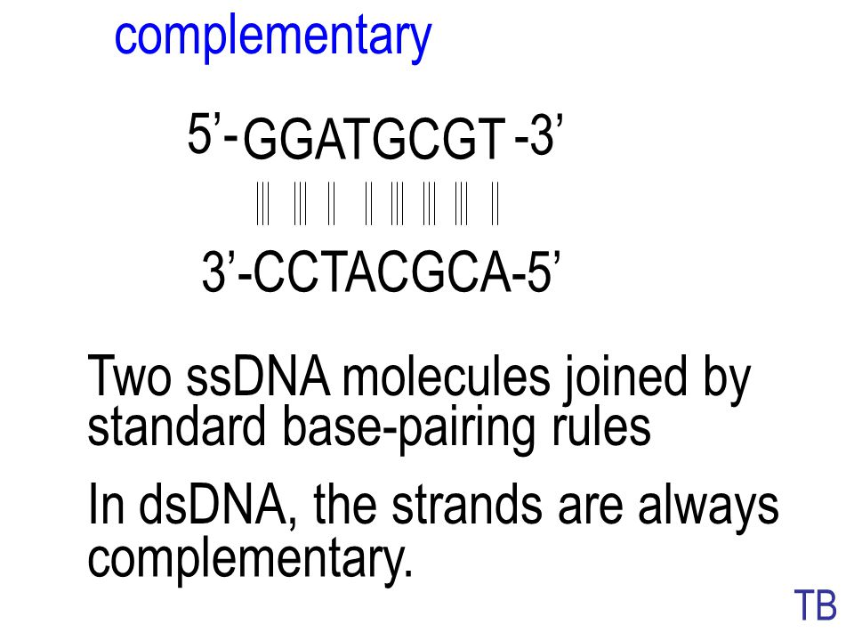 dsDNA 5' 3' antiparallel dsDNA is always antiparallel