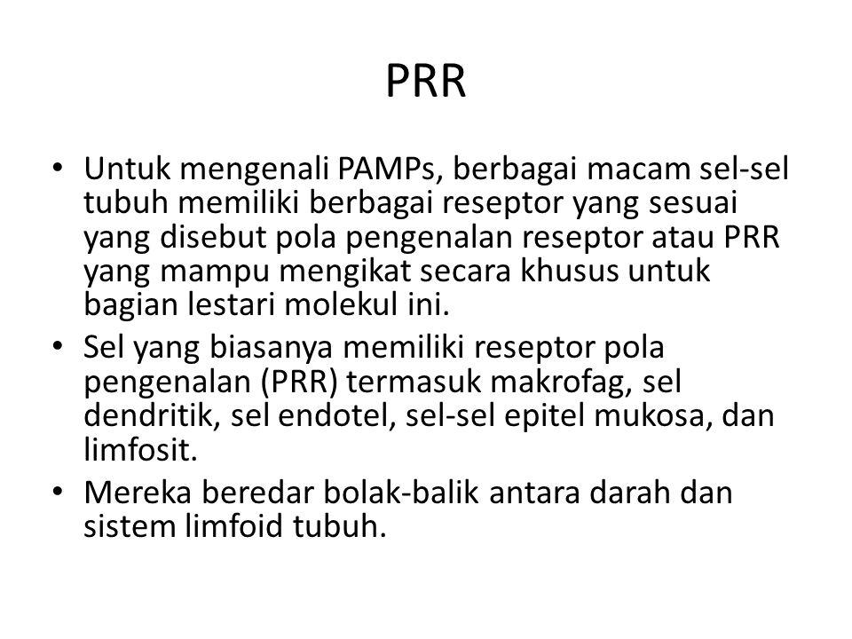 PRR Untuk mengenali PAMPs, berbagai macam sel-sel tubuh memiliki berbagai reseptor yang sesuai yang disebut pola pengenalan reseptor atau PRR yang mampu mengikat secara khusus untuk bagian lestari molekul ini.