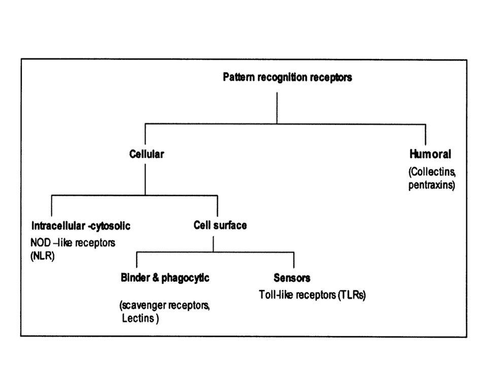 Banyak PRR yang terletak pada permukaan sel-sel dimana mereka dapat berinteraksi dengan PAMPs pada permukaan mikroba.