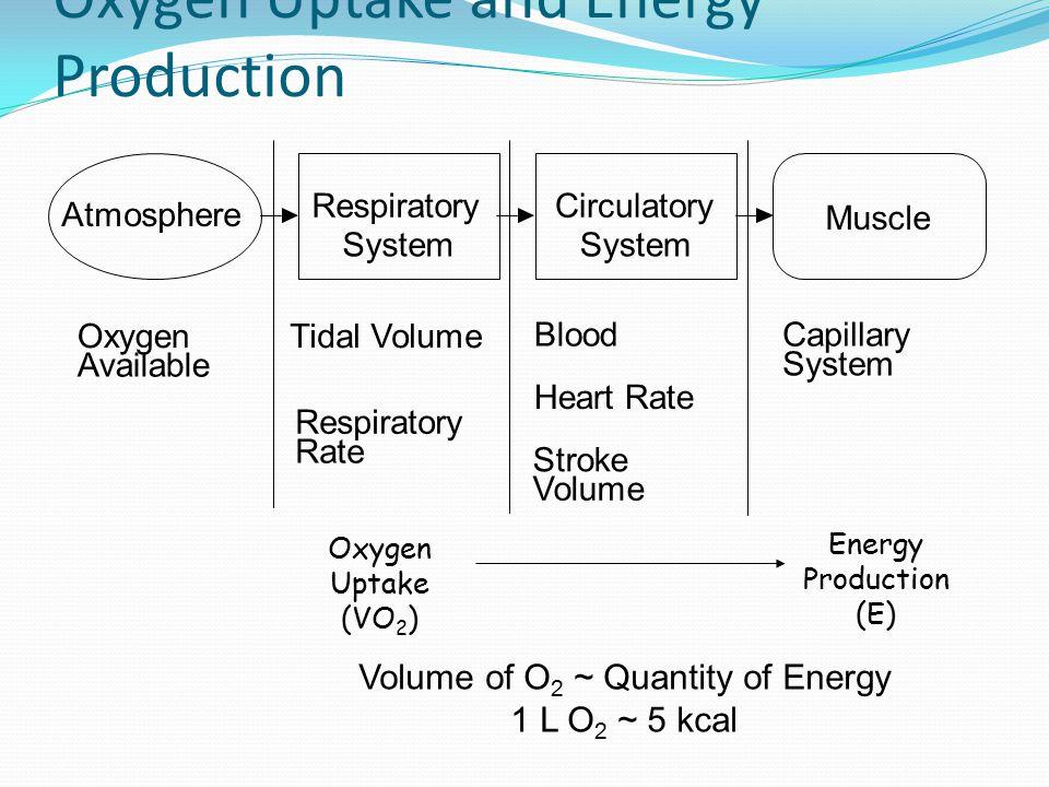 Faal Kerja Mengenai pemakaian energi tubuh untuk kerja Tentang reaksi tubuh terhadap beban- beban lingkungan (klimat, fisik, biologik)