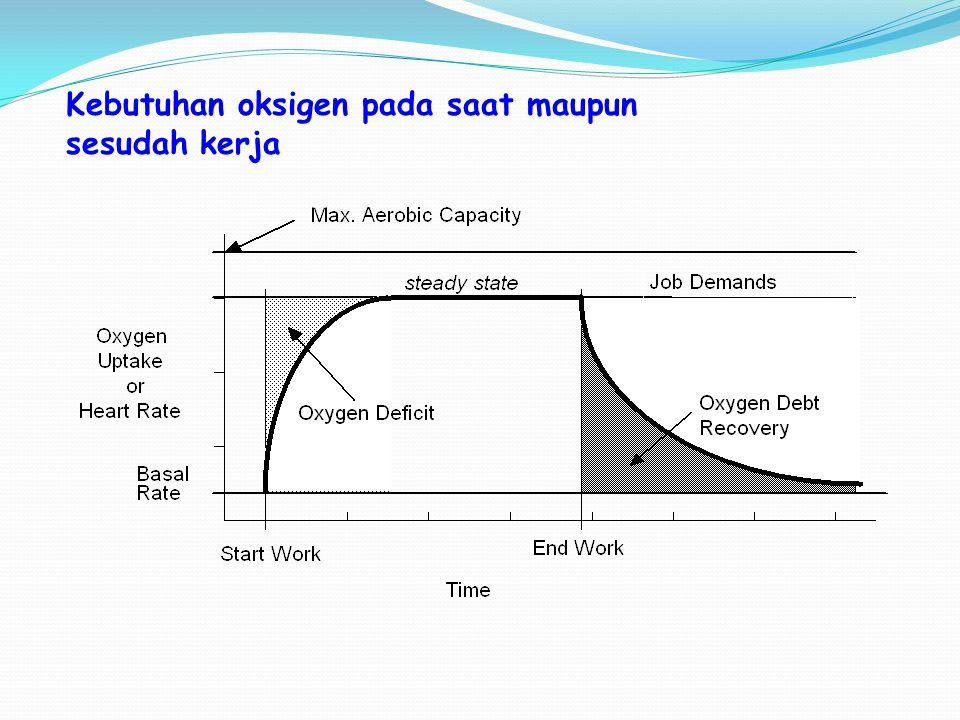 Metabolisme Otot