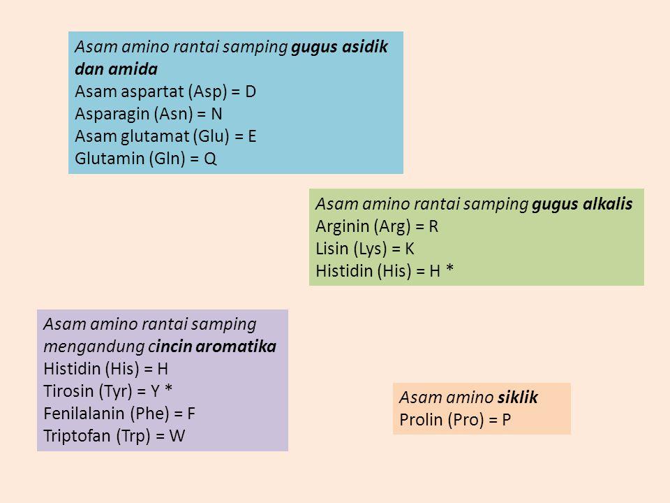ASAM-ASAM AMINO YANG TERDAPAT DALAM PROTEIN Asam amino rantai samping alifatik Glisin (Gly) = G Valin (Val) = V Alanin (Ala) = A Leusin (Leu) = L Isol