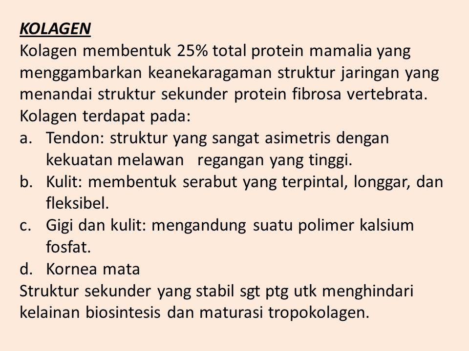Asam amino rantai samping gugus asidik dan amida Asam aspartat (Asp) = D Asparagin (Asn) = N Asam glutamat (Glu) = E Glutamin (Gln) = Q Asam amino ran