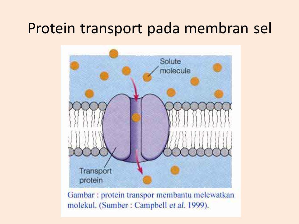 Protein pada membran sel
