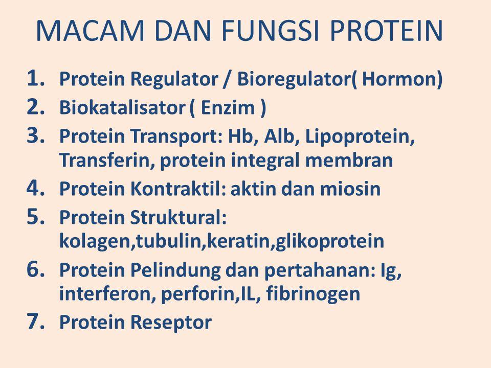 MACAM DAN FUNGSI PROTEIN 1.Protein Regulator / Bioregulator( Hormon) 2.