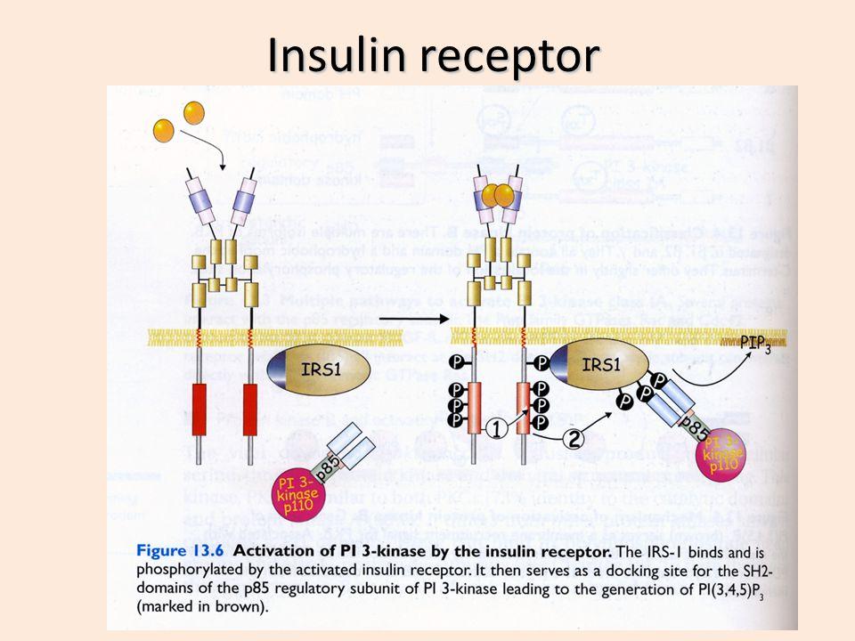 Epinephrine (adrenaline) receptor