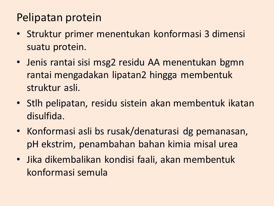 Pelipatan protein Struktur primer menentukan konformasi 3 dimensi suatu protein.