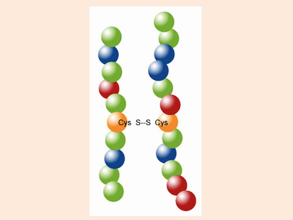 Pelipatan protein Struktur primer menentukan konformasi 3 dimensi suatu protein. Jenis rantai sisi msg2 residu AA menentukan bgmn rantai mengadakan li
