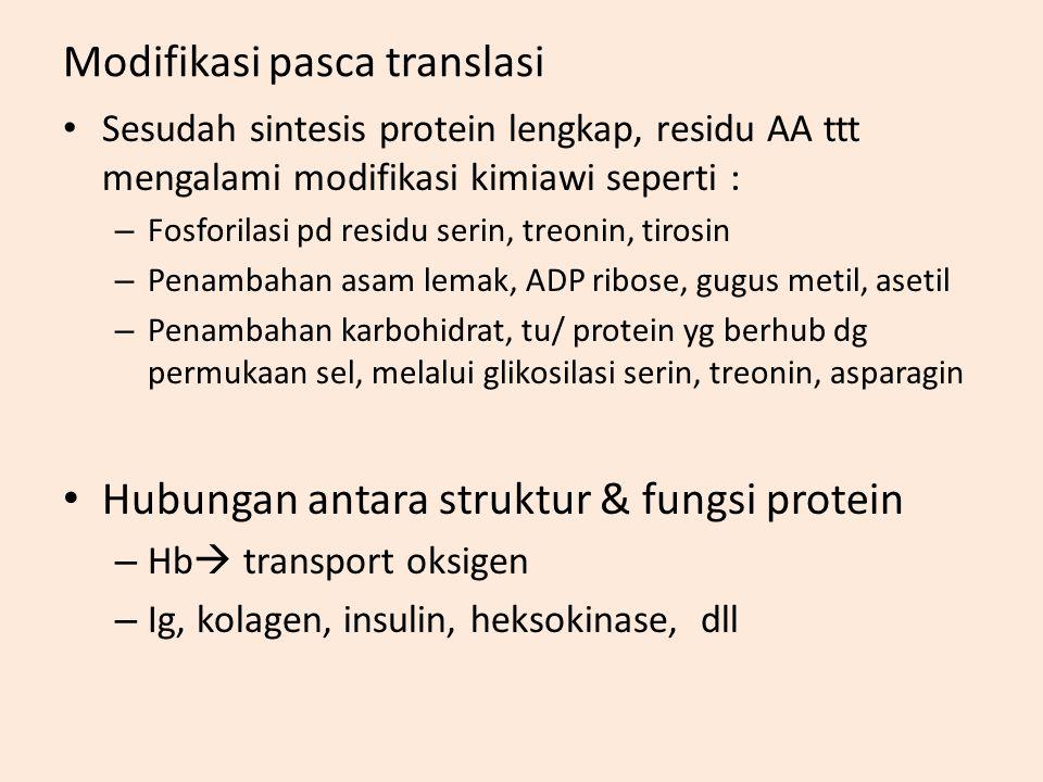 Modifikasi pasca translasi Sesudah sintesis protein lengkap, residu AA ttt mengalami modifikasi kimiawi seperti : – Fosforilasi pd residu serin, treonin, tirosin – Penambahan asam lemak, ADP ribose, gugus metil, asetil – Penambahan karbohidrat, tu/ protein yg berhub dg permukaan sel, melalui glikosilasi serin, treonin, asparagin Hubungan antara struktur & fungsi protein – Hb  transport oksigen – Ig, kolagen, insulin, heksokinase, dll
