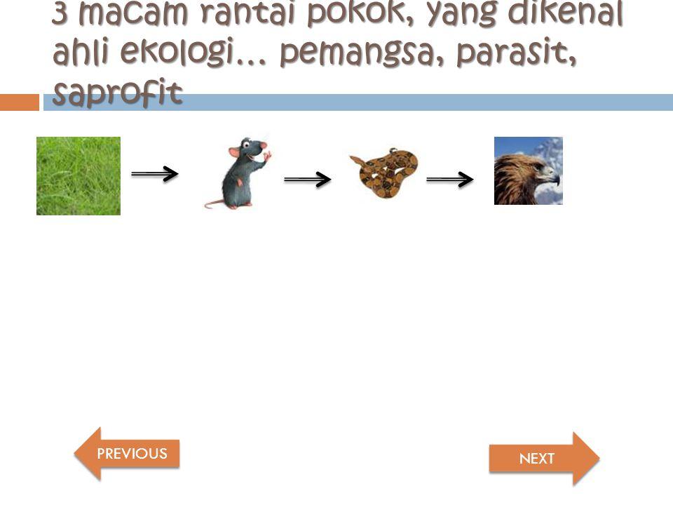 2 type dasar rantai makanan:  Rantai makanan rerumputan (grazing food chain).
