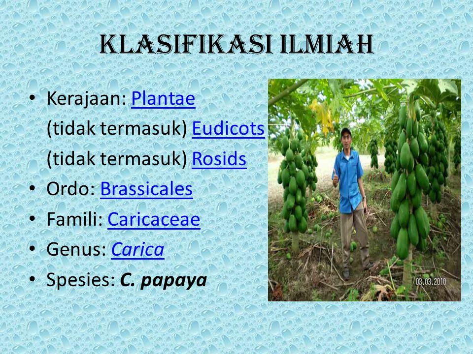 Klasifikasi ilmiah Kerajaan: PlantaePlantae (tidak termasuk) EudicotsEudicots (tidak termasuk) RosidsRosids Ordo: BrassicalesBrassicales Famili: CaricaceaeCaricaceae Genus: CaricaCarica Spesies: C.