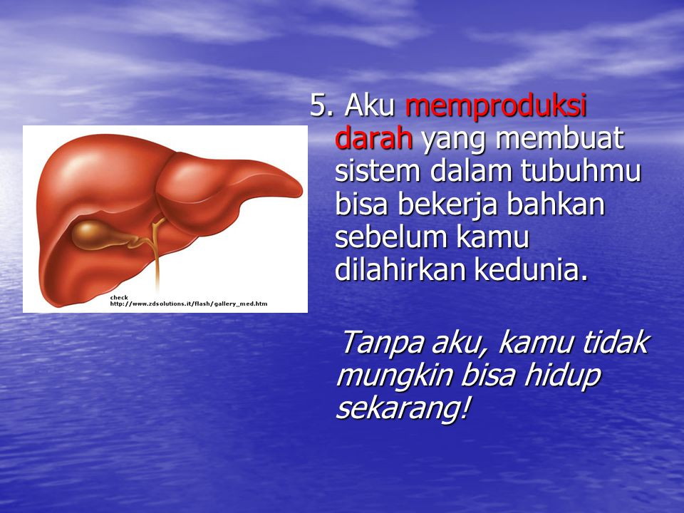 5. Aku memproduksi darah yang membuat sistem dalam tubuhmu bisa bekerja bahkan sebelum kamu dilahirkan kedunia. Tanpa aku, kamu tidak mungkin bisa hid