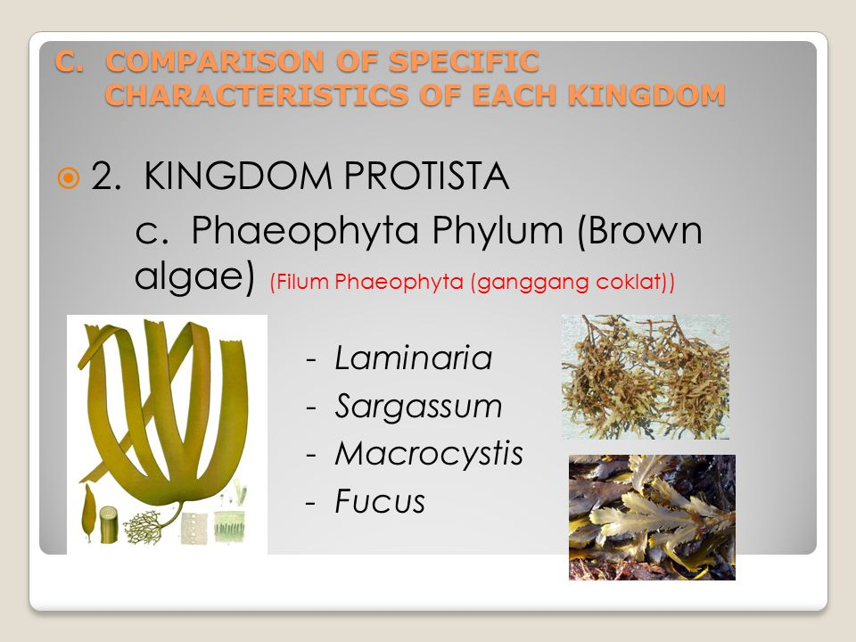 C. COMPARISON OF SPECIFIC CHARACTERISTICS OF EACH KINGDOM  2.