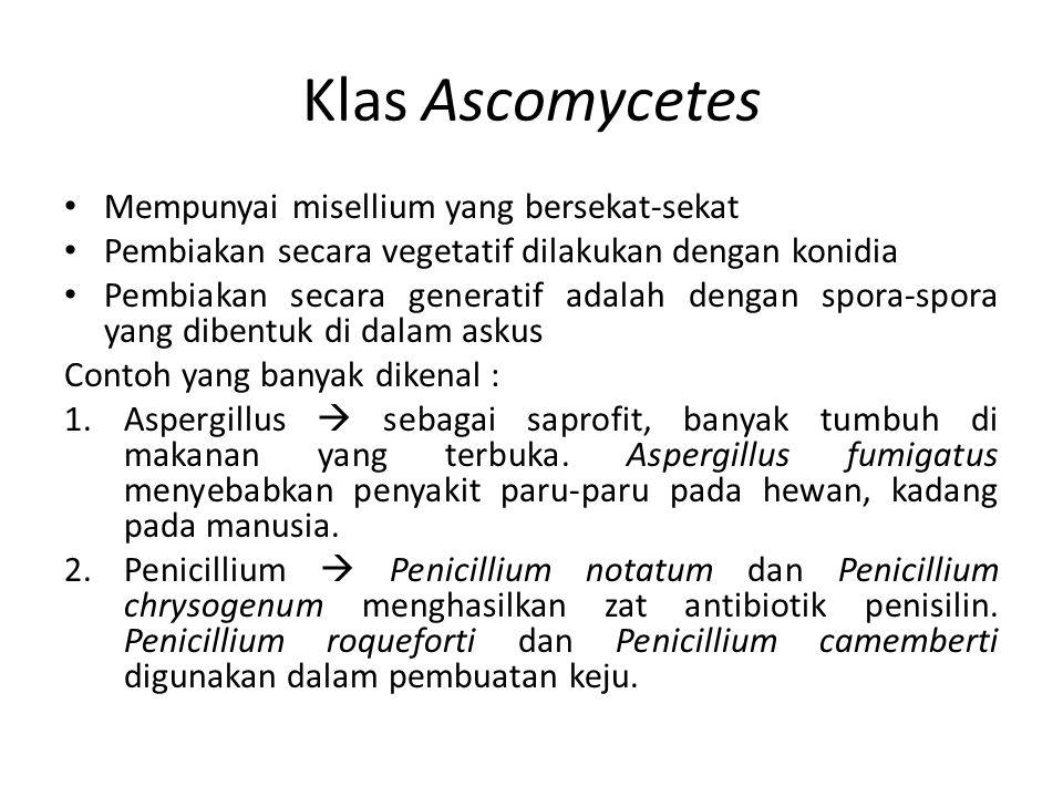 Klas Ascomycetes Mempunyai misellium yang bersekat-sekat Pembiakan secara vegetatif dilakukan dengan konidia Pembiakan secara generatif adalah dengan