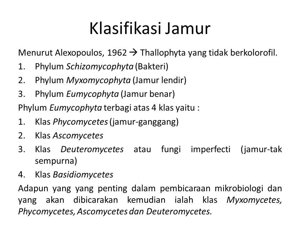 Klasifikasi Jamur Menurut Alexopoulos, 1962  Thallophyta yang tidak berkolorofil. 1.Phylum Schizomycophyta (Bakteri) 2.Phylum Myxomycophyta (Jamur le