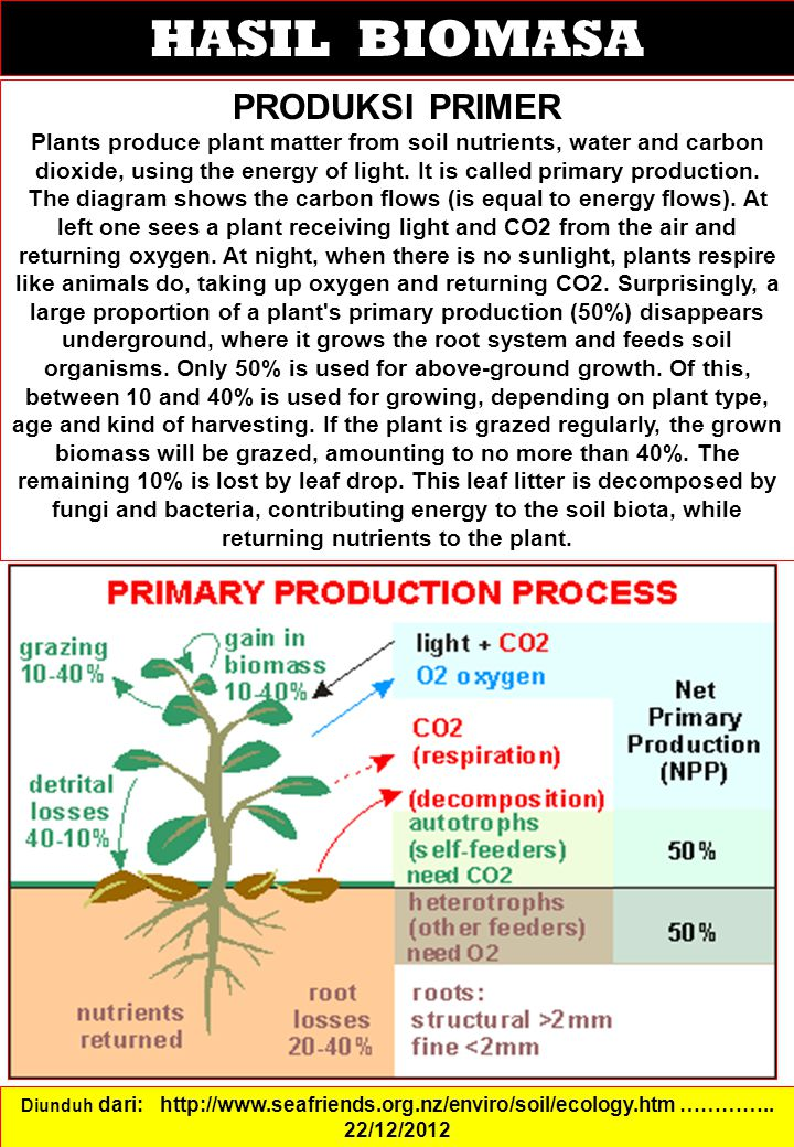 HASIL BIOMASA PRODUKSI PRIMER Plants produce plant matter from soil nutrients, water and carbon dioxide, using the energy of light. It is called prima