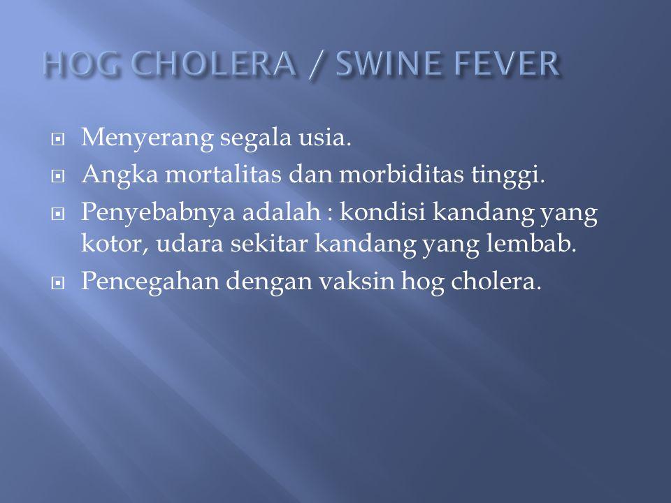  Penyebabnya : Mycobacterium tuberculosis.