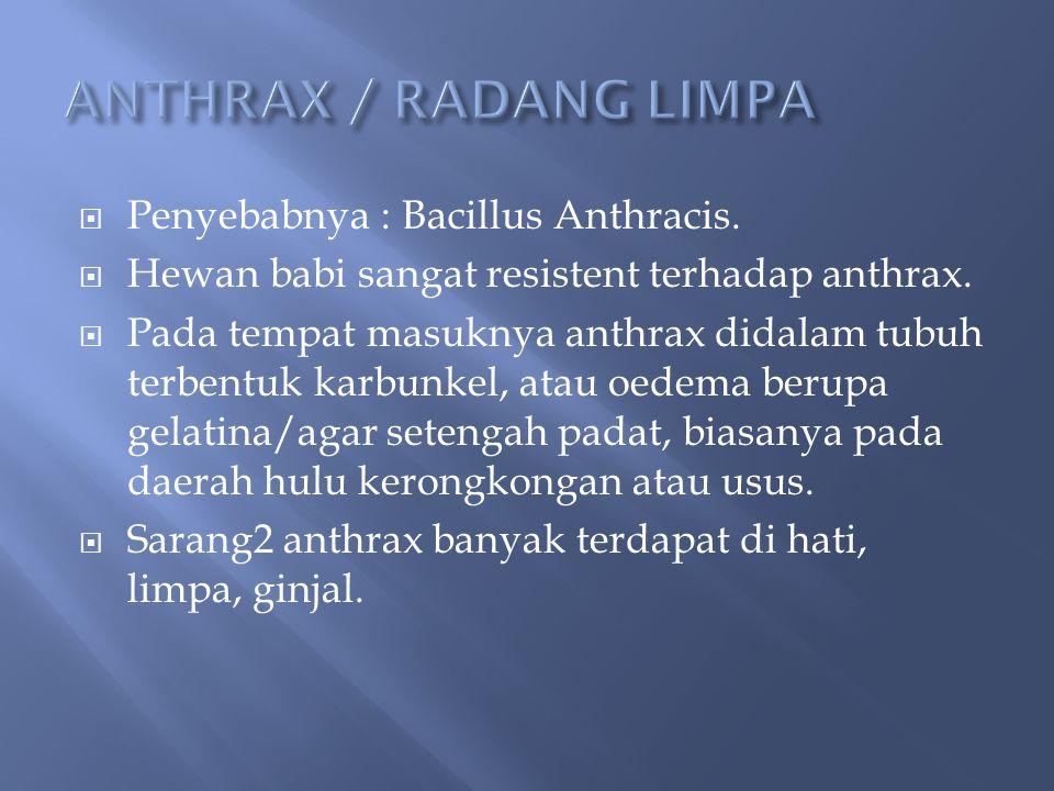  Penyebabnya : Bacillus Anthracis.  Hewan babi sangat resistent terhadap anthrax.  Pada tempat masuknya anthrax didalam tubuh terbentuk karbunkel,