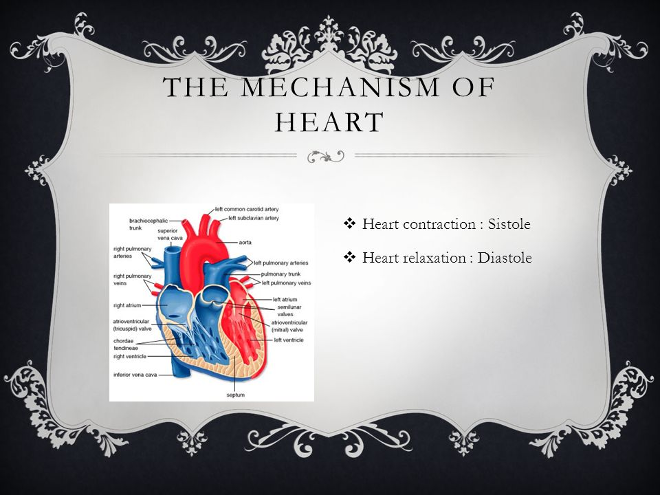  Heart contraction : Sistole  Heart relaxation : Diastole THE MECHANISM OF HEART