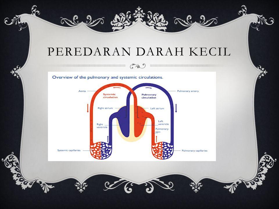 Darah dari ventrikel kanan akan dipompa melalui katup pulmoner ke dalam arteri pulmonalis, menuju ke paru-paru.