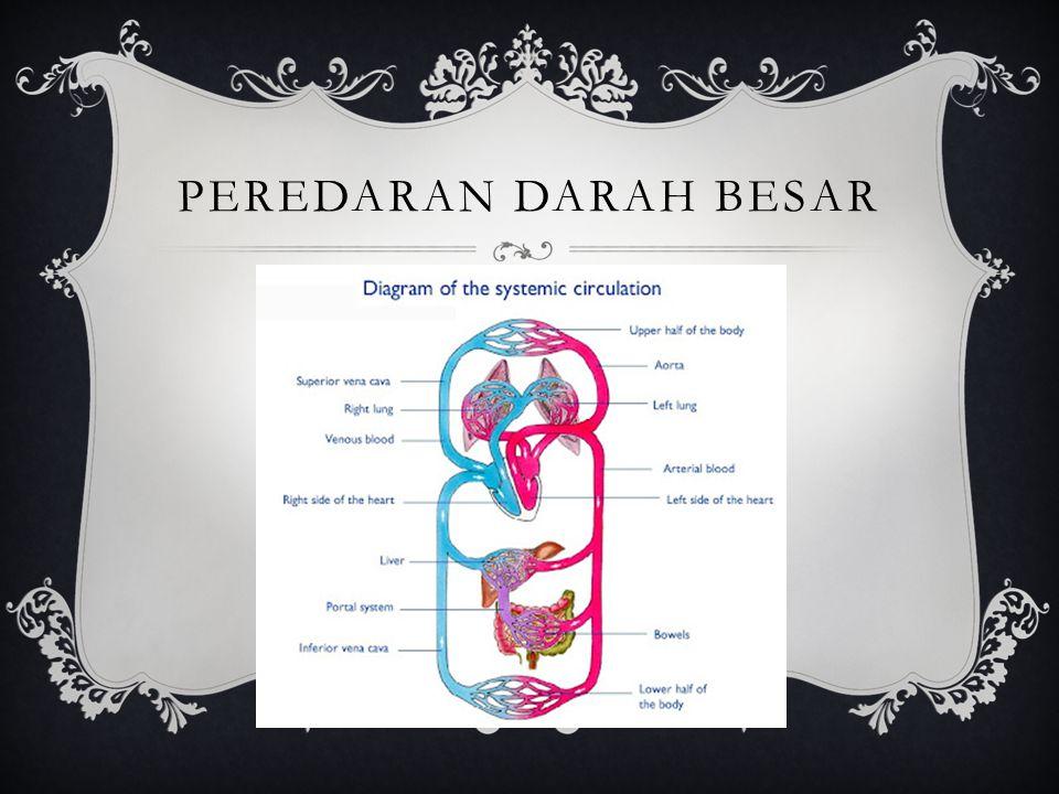  Darah dalam atrium kiri akan didorong ke dalam ventrikel kiri, yang selanjutnya akan memompa darah yang kaya akan oksigen ini melewati katup aorta masuk ke dalam aorta (arteri terbesar dalam tubuh).