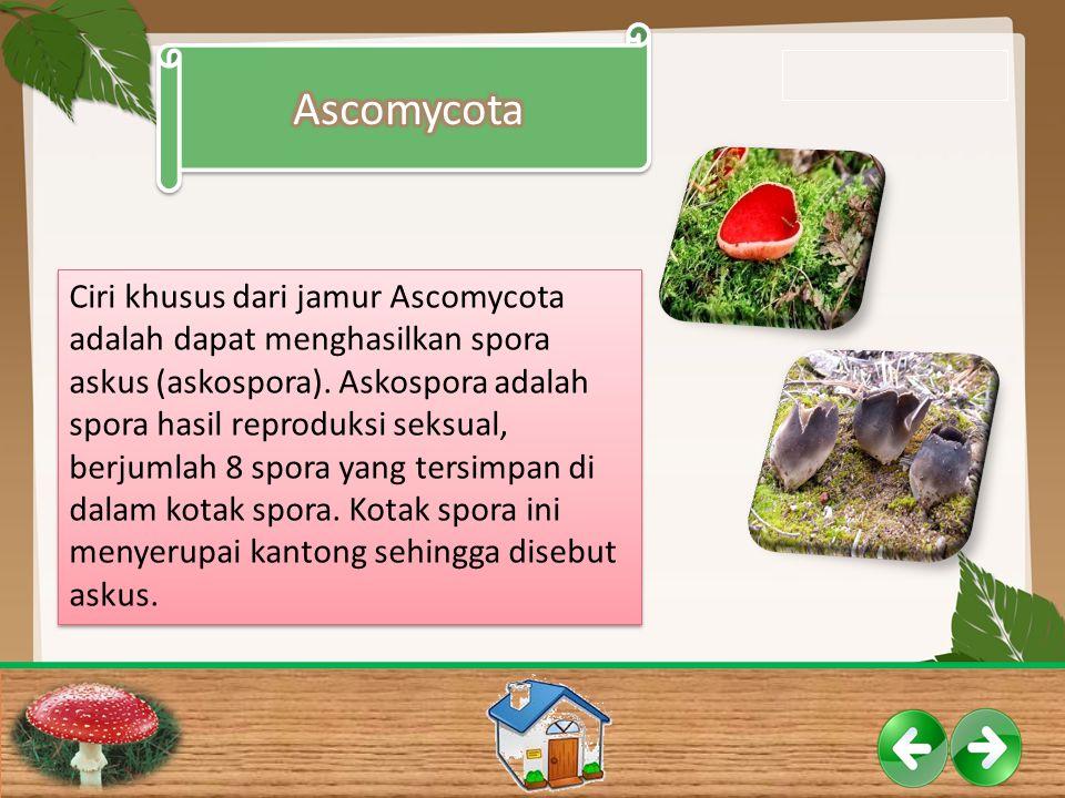 Ciri khusus dari jamur Ascomycota adalah dapat menghasilkan spora askus (askospora). Askospora adalah spora hasil reproduksi seksual, berjumlah 8 spor