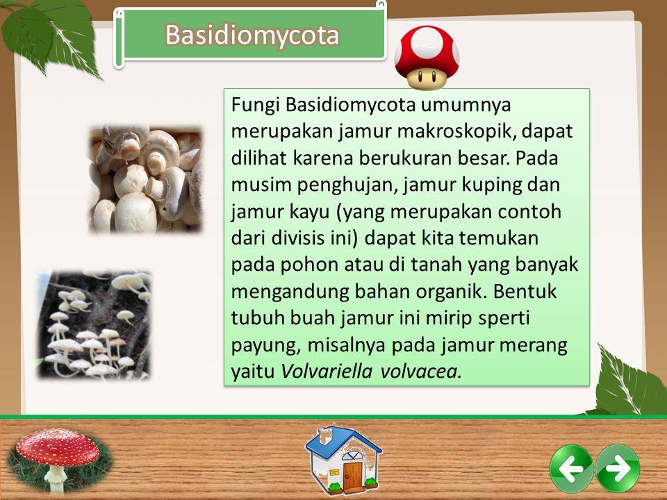 Fungi Basidiomycota umumnya merupakan jamur makroskopik, dapat dilihat karena berukuran besar. Pada musim penghujan, jamur kuping dan jamur kayu (yang