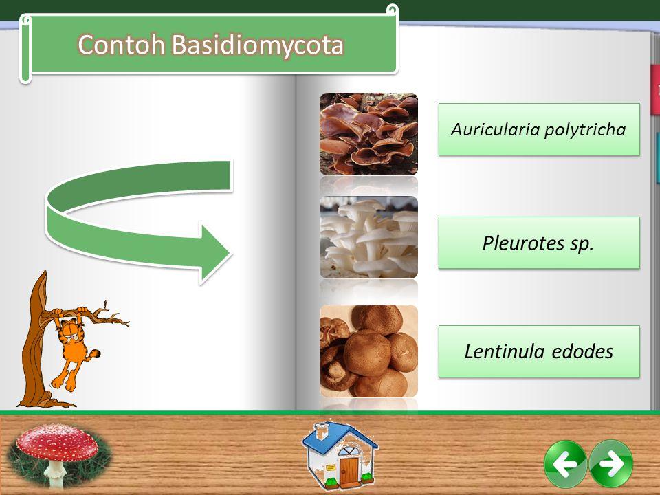 Auricularia polytricha Pleurotes sp. Lentinula edodes