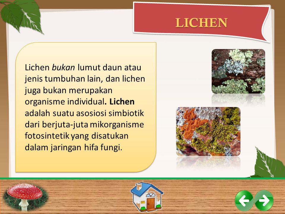 LICHEN LICHEN Lichen bukan lumut daun atau jenis tumbuhan lain, dan lichen juga bukan merupakan organisme individual.
