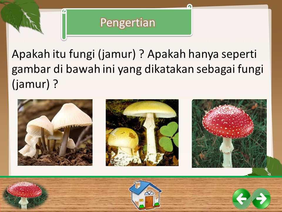 Apakah itu fungi (jamur) ? Apakah hanya seperti gambar di bawah ini yang dikatakan sebagai fungi (jamur) ?