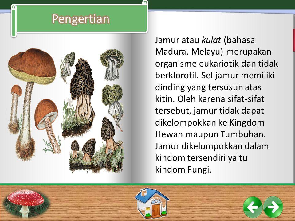 Secara umum, fungi memiliki karakteristik sebagai berikut: 1.