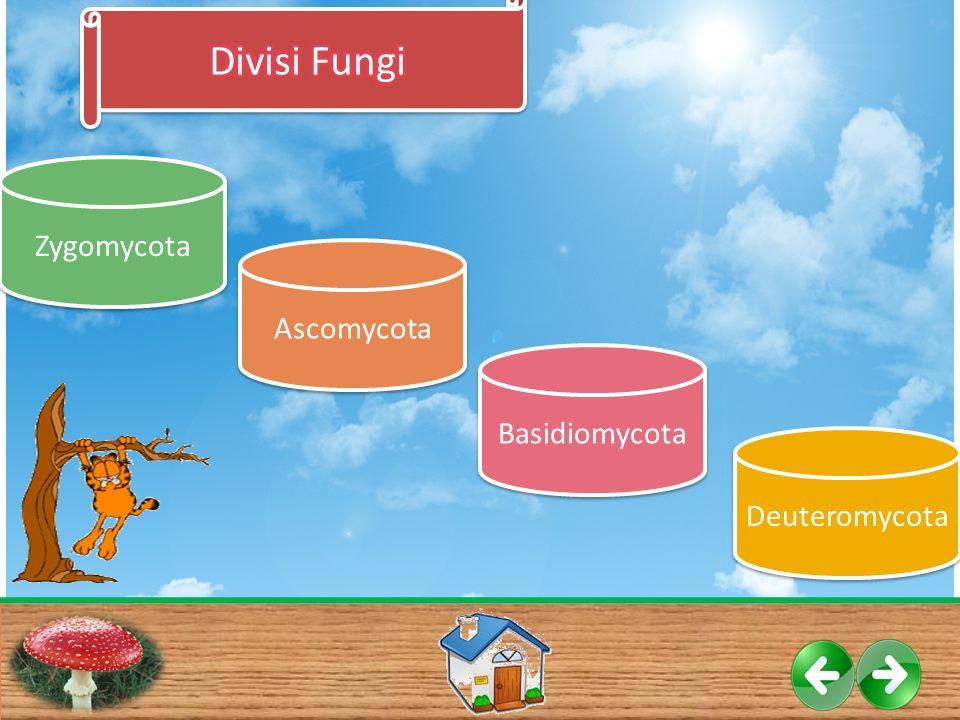 Ascomycota Deuteromycota Basidiomycota Zygomycota