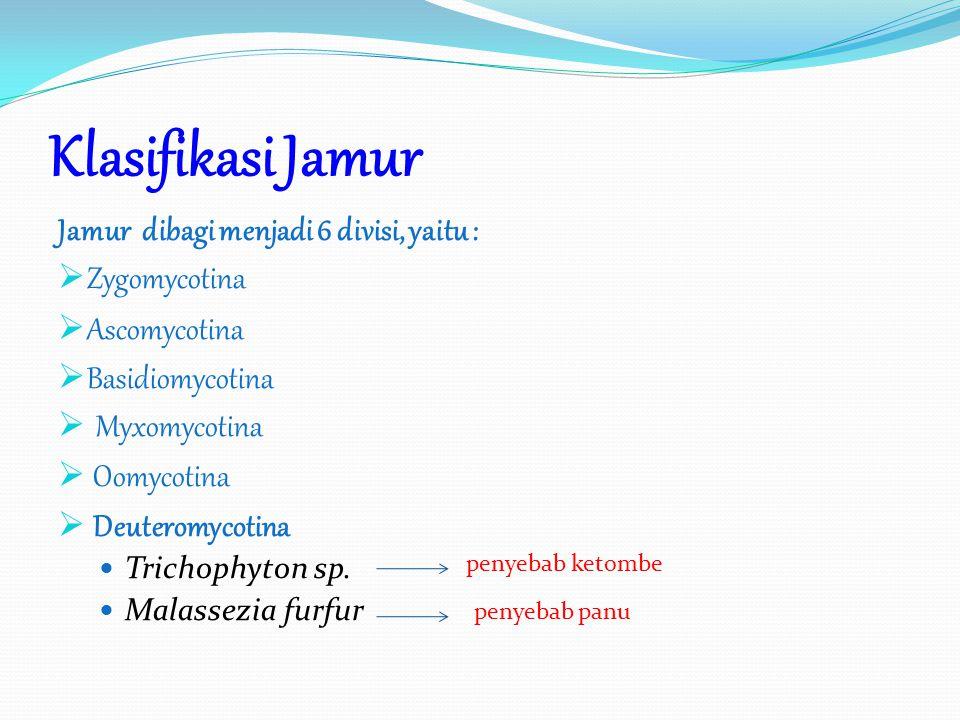 Klasifikasi Jamur Jamur dibagi menjadi 6 divisi, yaitu :  Zygomycotina  Ascomycotina  Basidiomycotina  Myxomycotina  Oomycotina  Deuteromycotina