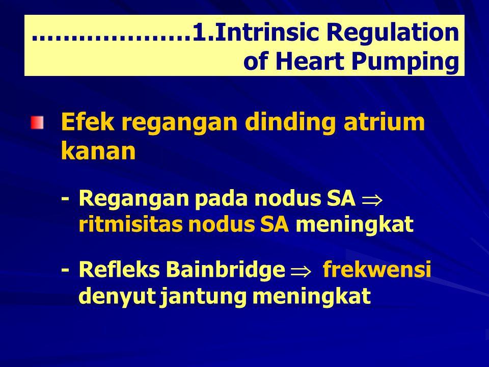 ..…..………….1.Intrinsic Regulation of Heart Pumping Efek regangan dinding atrium kanan - Regangan pada nodus SA  ritmisitas nodus SA meningkat - Refleks Bainbridge  frekwensi denyut jantung meningkat