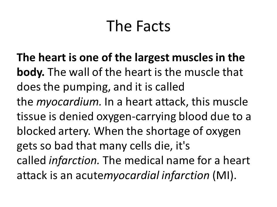 Jantung adalah salah satu otot terbesar dalam tubuh.