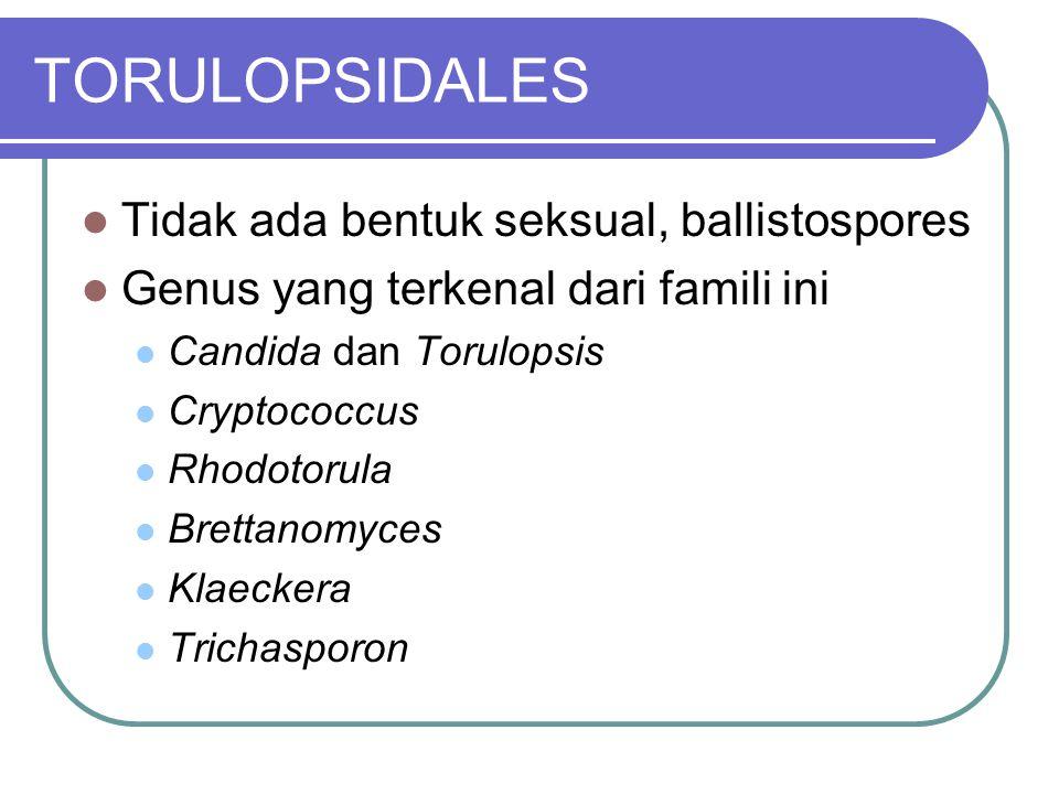 TORULOPSIDALES Tidak ada bentuk seksual, ballistospores Genus yang terkenal dari famili ini Candida dan Torulopsis Cryptococcus Rhodotorula Brettanomy