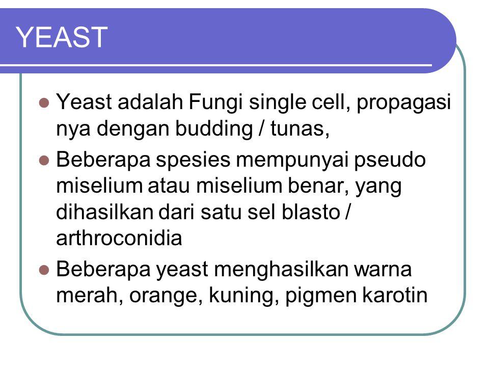 YEAST Yeast adalah Fungi single cell, propagasi nya dengan budding / tunas, Beberapa spesies mempunyai pseudo miselium atau miselium benar, yang dihasilkan dari satu sel blasto / arthroconidia Beberapa yeast menghasilkan warna merah, orange, kuning, pigmen karotin