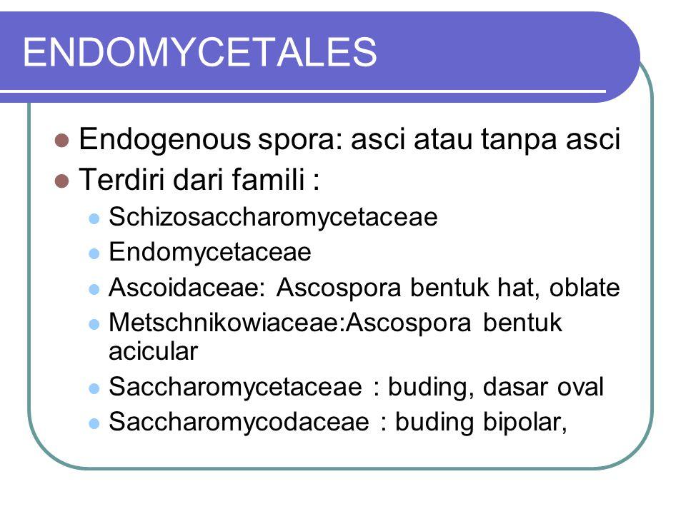 ENDOMYCETALES Endogenous spora: asci atau tanpa asci Terdiri dari famili : Schizosaccharomycetaceae Endomycetaceae Ascoidaceae: Ascospora bentuk hat,