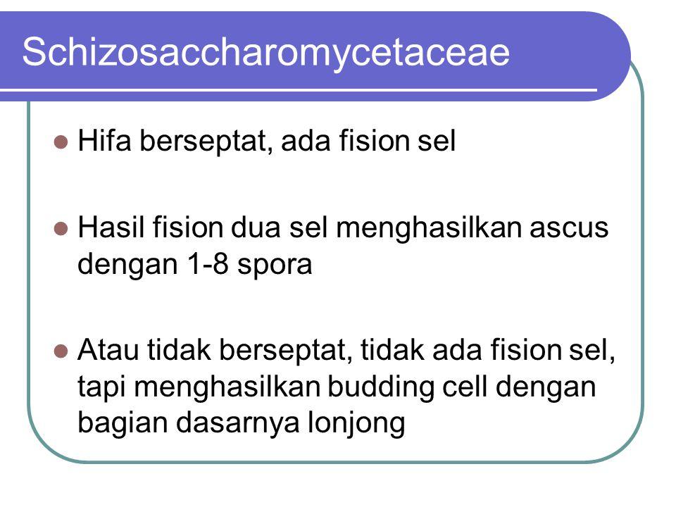 Schizosaccharomycetaceae Hifa berseptat, ada fision sel Hasil fision dua sel menghasilkan ascus dengan 1-8 spora Atau tidak berseptat, tidak ada fision sel, tapi menghasilkan budding cell dengan bagian dasarnya lonjong