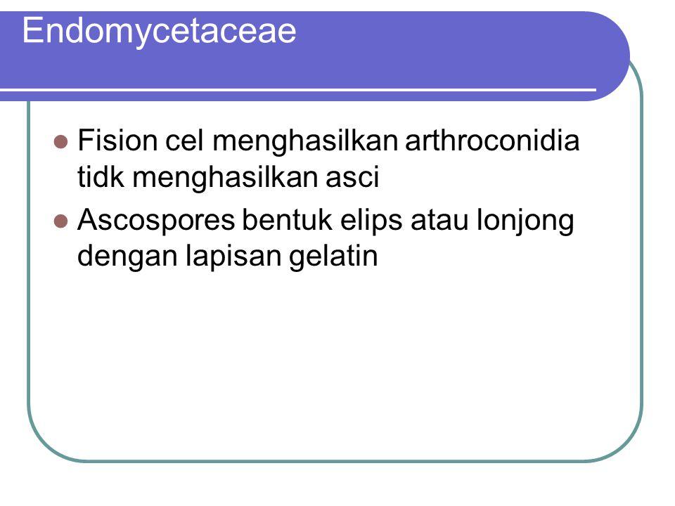 Endomycetaceae Fision cel menghasilkan arthroconidia tidk menghasilkan asci Ascospores bentuk elips atau lonjong dengan lapisan gelatin