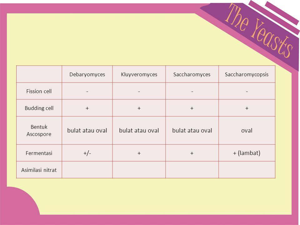 DebaryomycesKluyveromycesSaccharomycesSaccharomycopsis Fission cell ---- Budding cell ++++ Bentuk Ascospore bulat atau oval oval Fermentasi +/-+++ (la