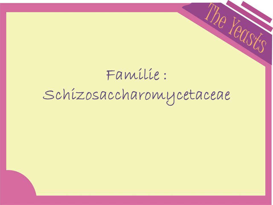 Familie : Schizosaccharomycetaceae